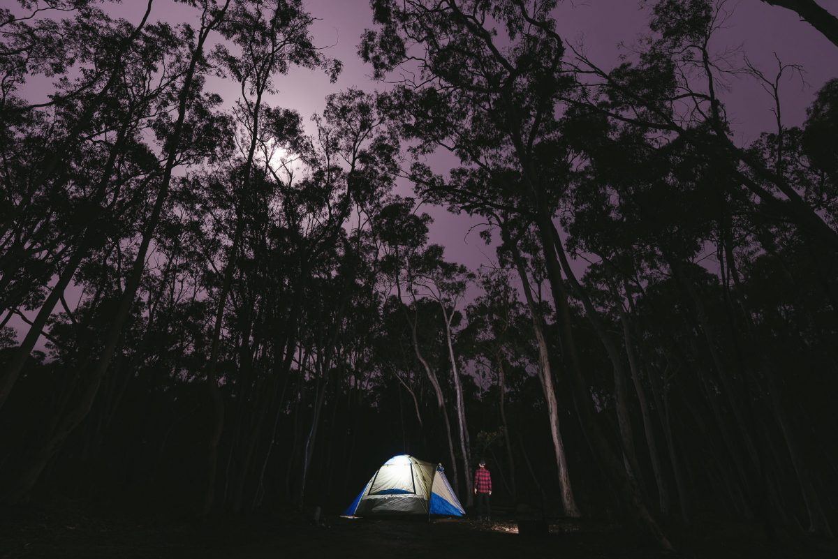 Tent under tall trees at night in bush