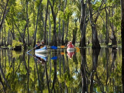 People paddle canoes on tree-lined Edward river