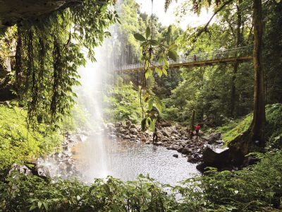 View from behind Crystal Showers Falls, Dorrigo National Park. Photo: Rob Cleary, Seen Australia/DPIE