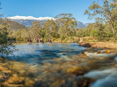 Horses wade through stream with snow-capped mountains in backround
