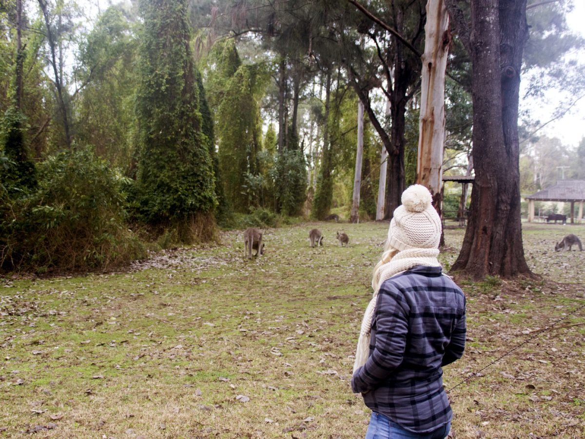 Girl watching kangaroos in the campground.