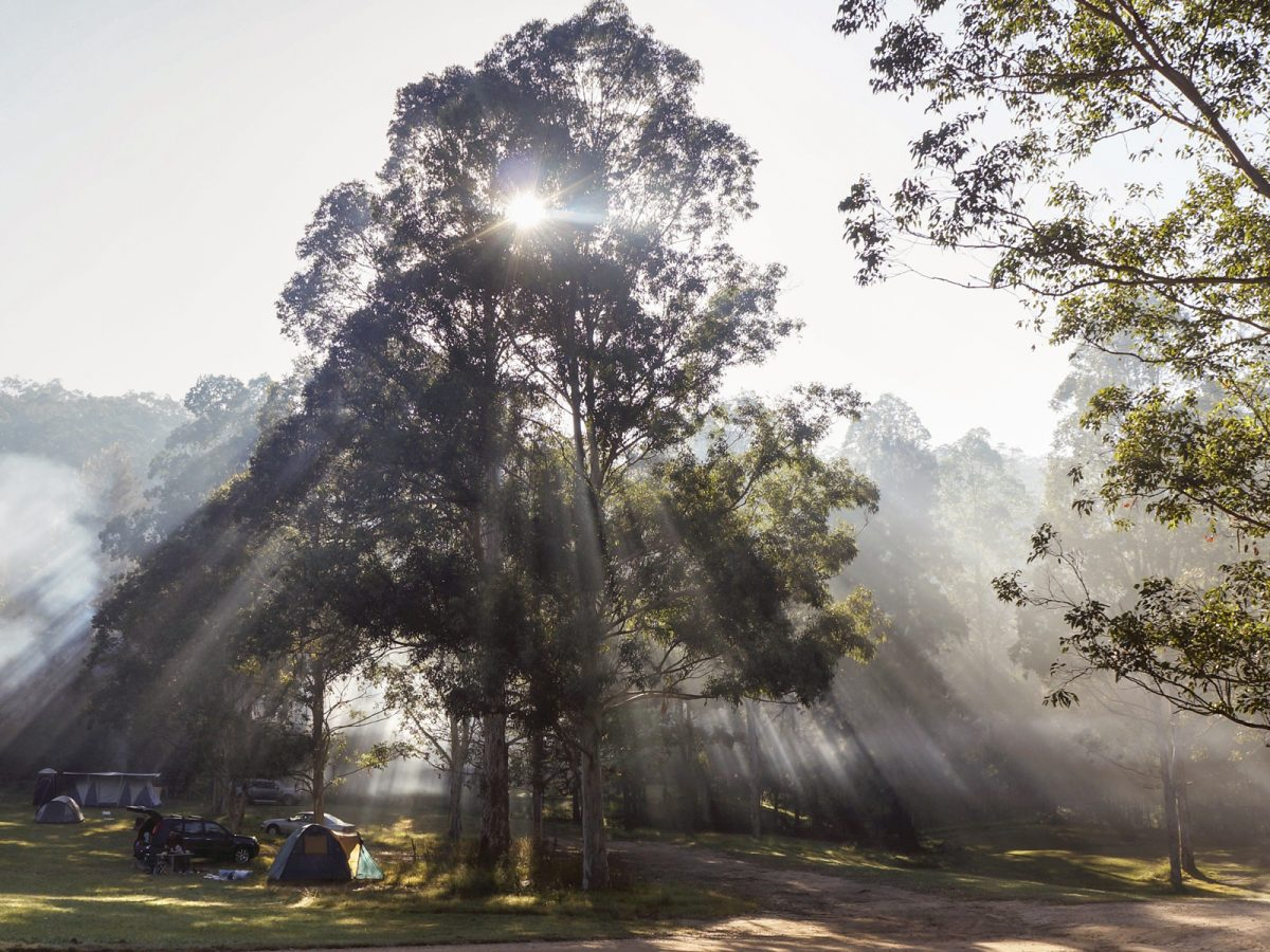 Misty sun filters through trees at campground