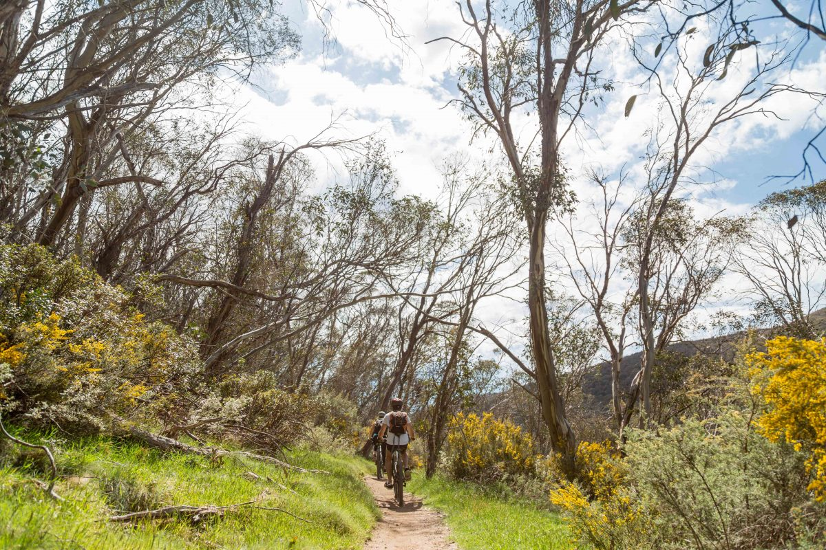 People riding mountain bikes along the Thredbo Valley track, Kosciuszko National Park. Photo: Boen Ferguson/DPIE