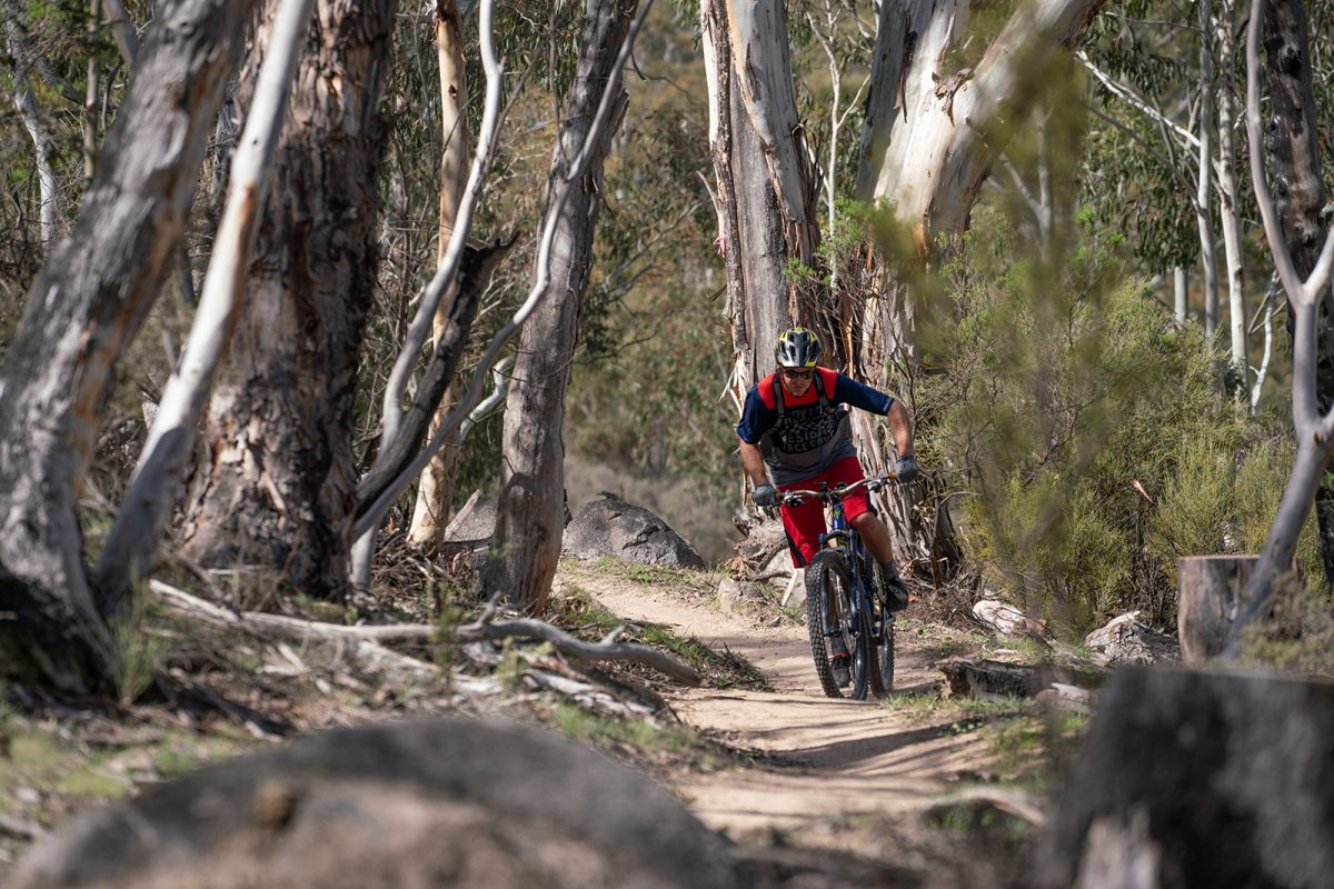 A person riding on the lower thredbo valley track