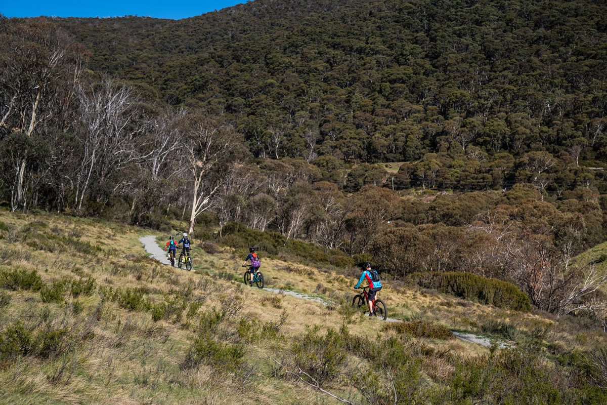 Side view of four people cycling on the Thredbo Valley Track