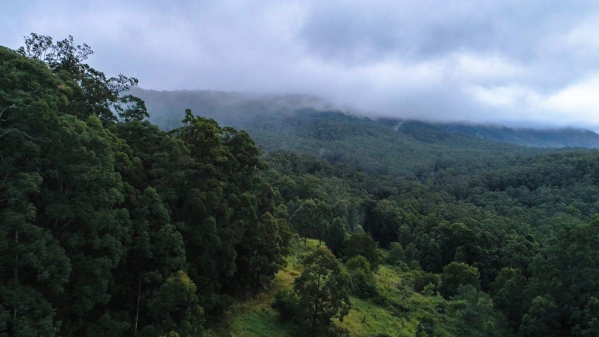 Rainforest at Mebbin National Park