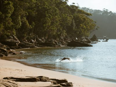 Person swimming at a beach, Ku-ring-gai Chase National Park