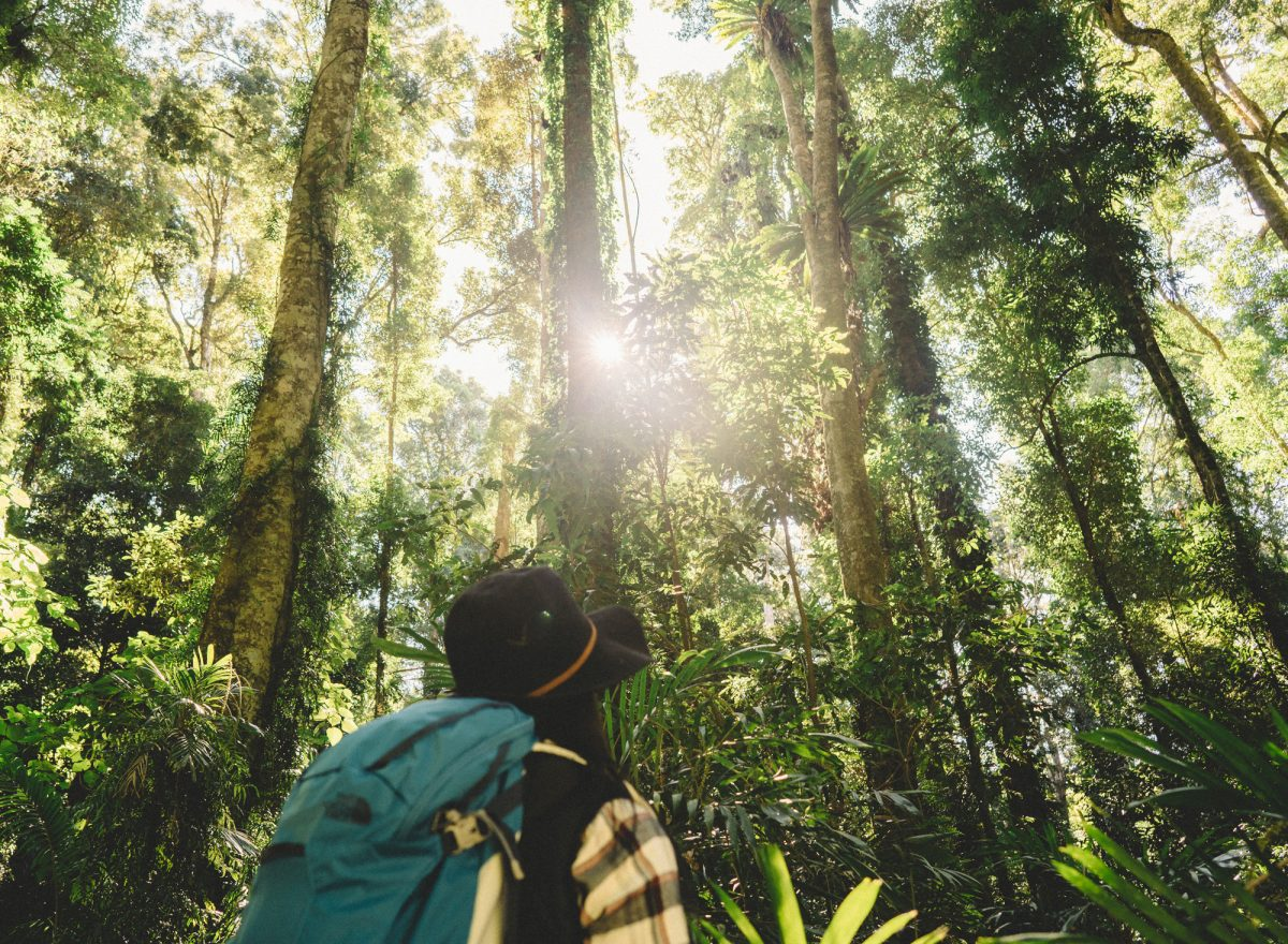 Walking in a NSW national park forest