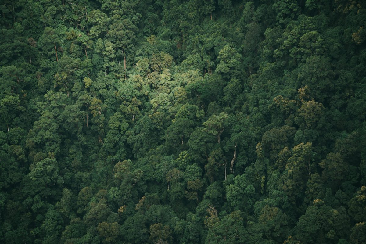 Aerial view of dense NSW national park bushland