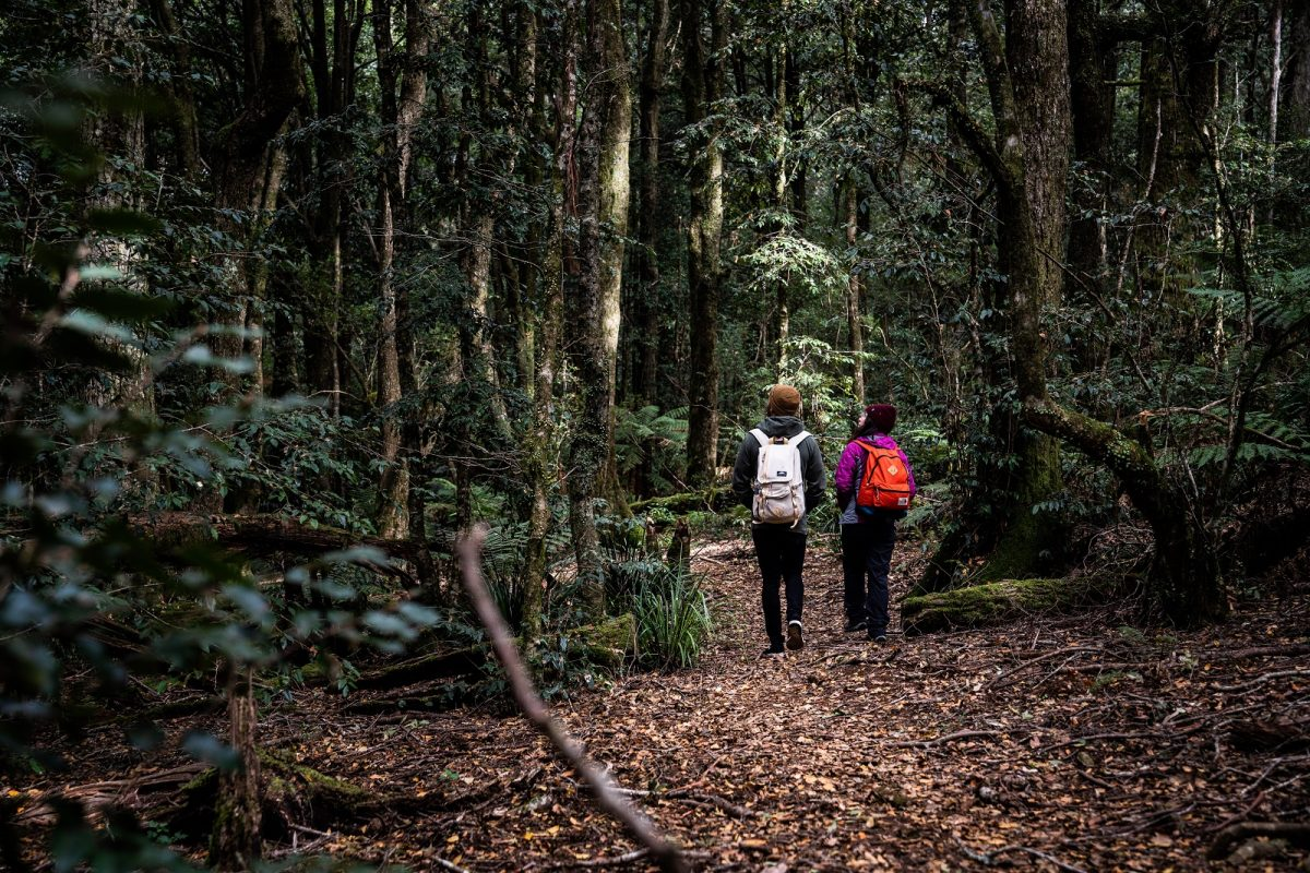 Two people walking through Barrington Tops National Park. Photo: Rob Mulally/OEH