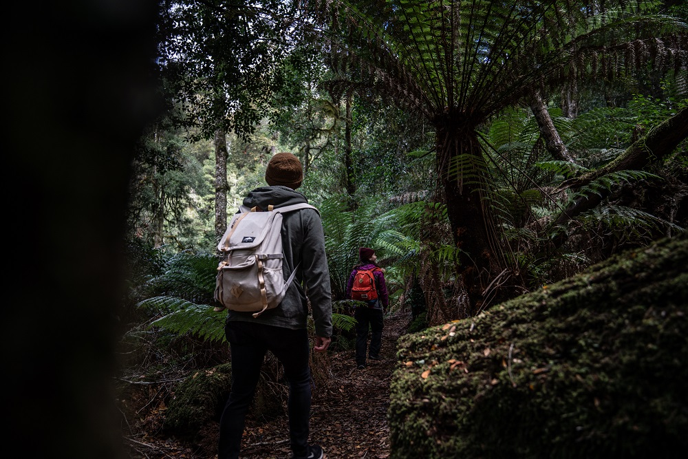 Hikers exploring the Honeysuckle Forest track in Barrington Tops National Park. Photo: Rob Mulally/OEH