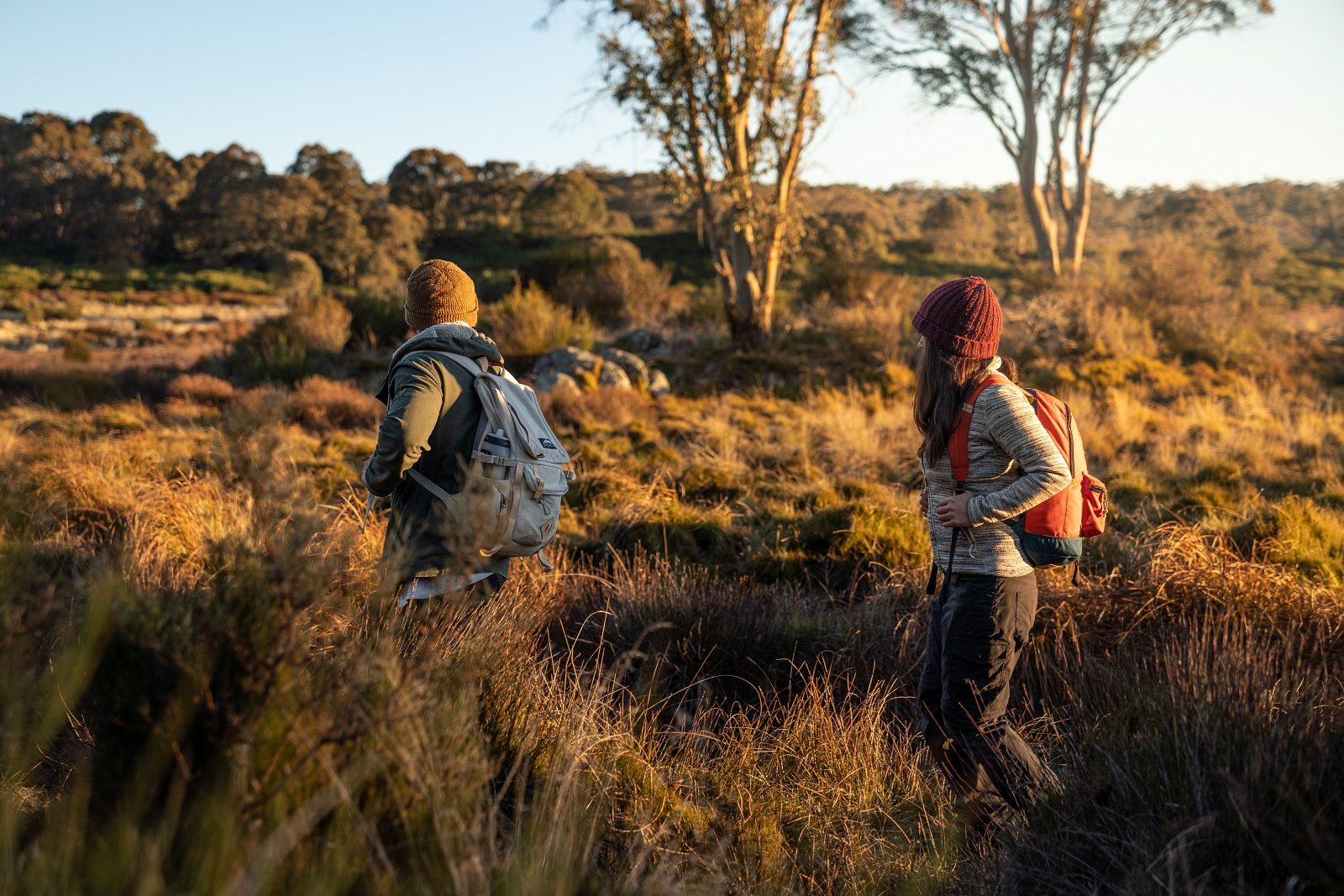 People hiking through Barrington Tops National Park. Photo: Rob Mulally/OEH