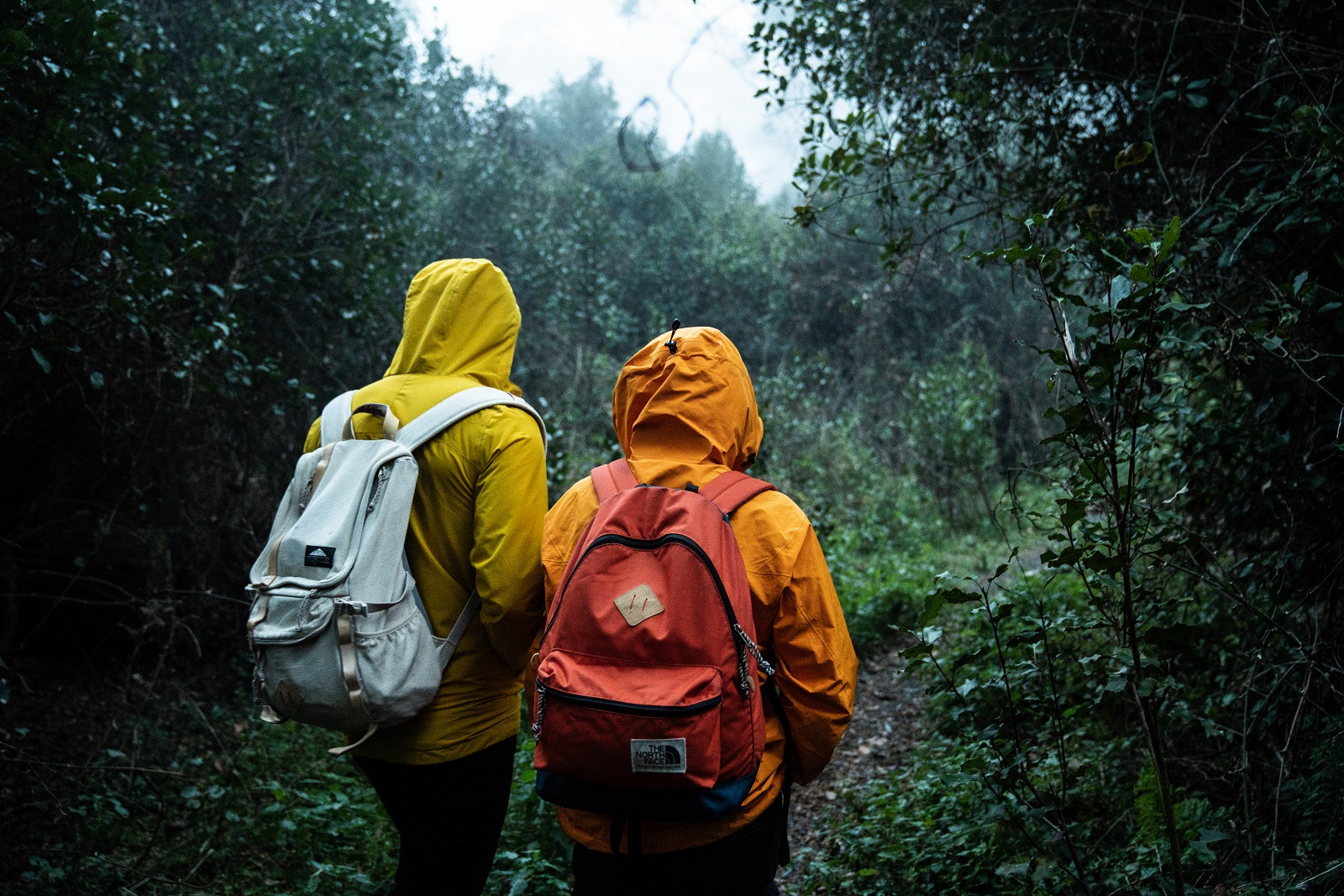 Hiking in the rain to Thunderbolts lookout in Barrington Tops National Park. Photo: Rob Mulally/OEH