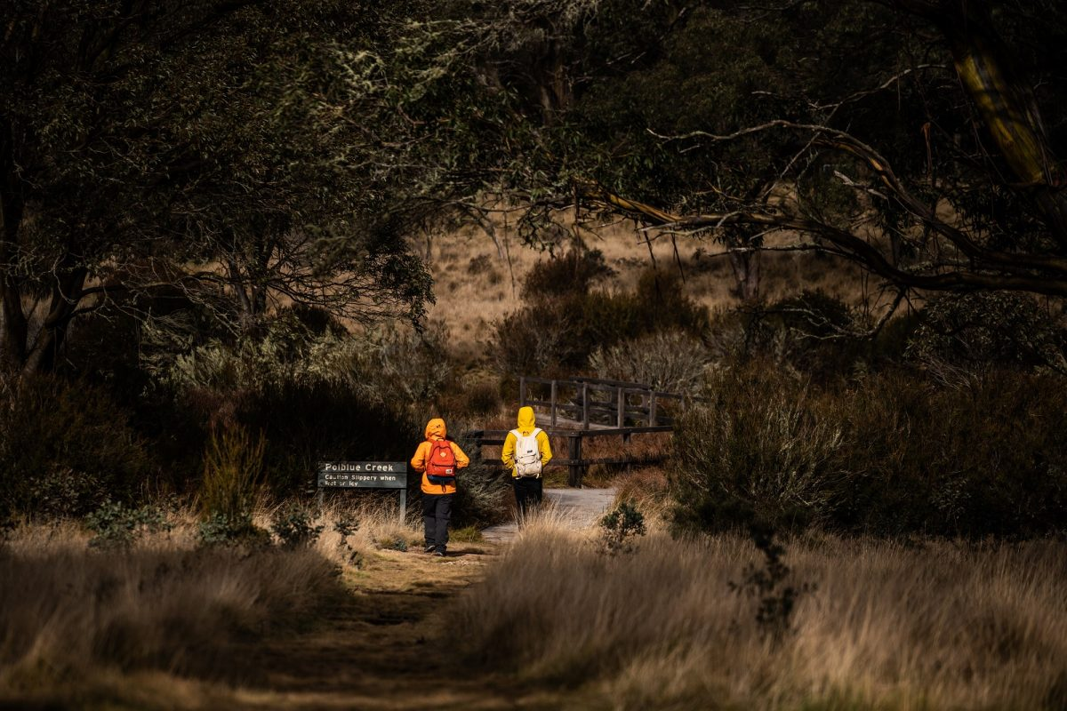 People walking through Polblue campground and picnic area in Barrington Tops National Park. Photo: Rob Mulally/OEH