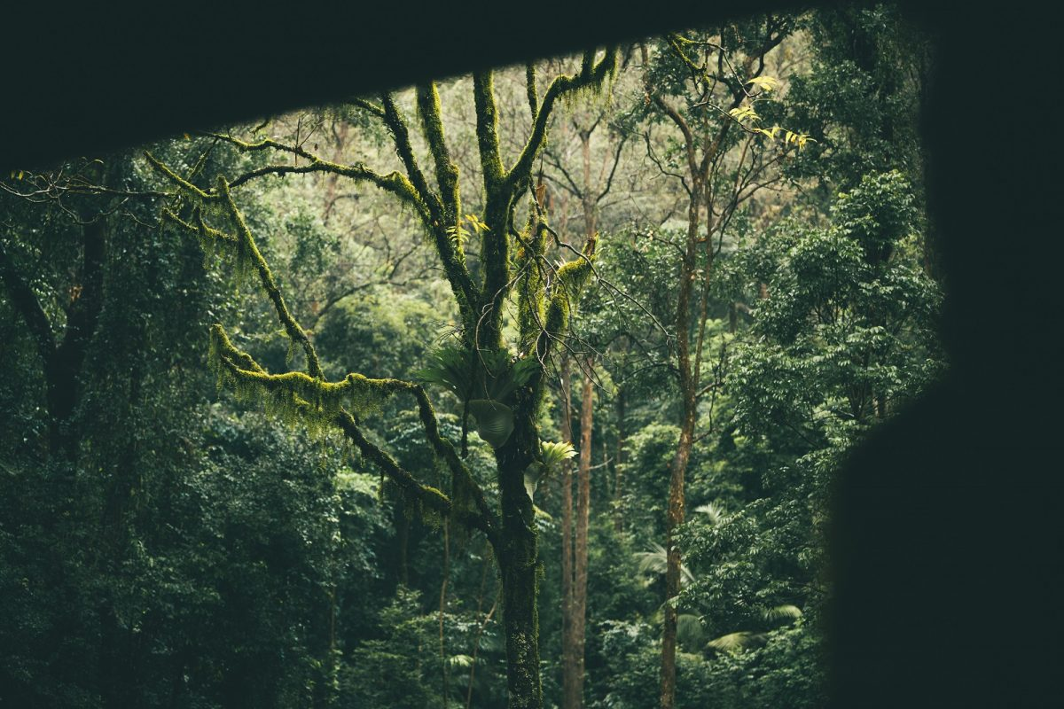 Exploring Border Ranges National Park. Photo: Branden Bodman/OEH