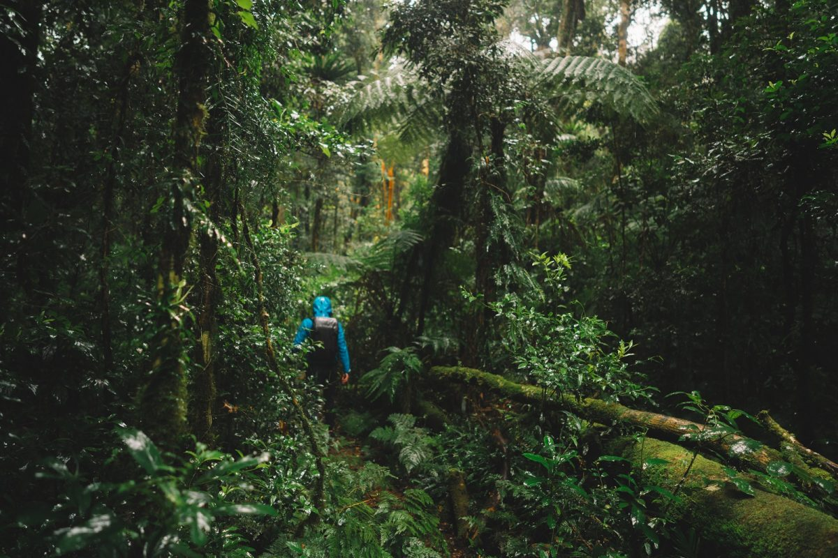 Person hiking through Border Ranges National Park. Photo: Branden Bodman/OEH