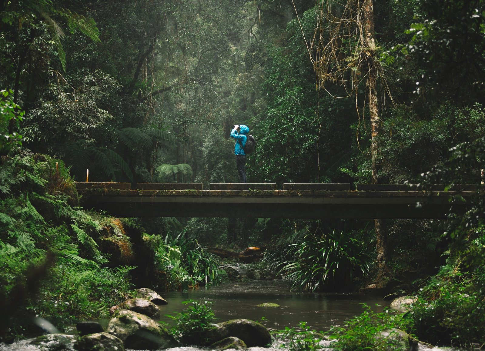 Person hiking in Border Ranges National Park. Photo: Branden Bodman/OEH