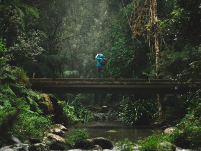 Person hiking in Border Ranges National Park. Photo: Branden Bodman/DPIE