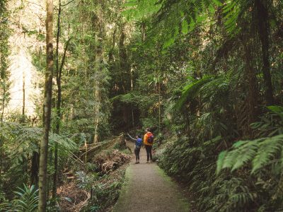 Two people walking in Dorrigo National Park. Photo: Branden Bodman/DPIE