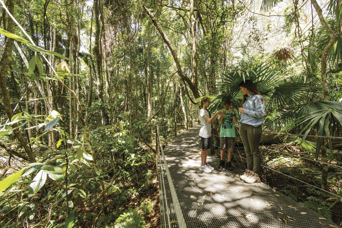 Family walking along boardwalk with ranger at Sea Acres Rainforest Centre, Sea Acres National Park. Photo: David Finnegan/OEH
