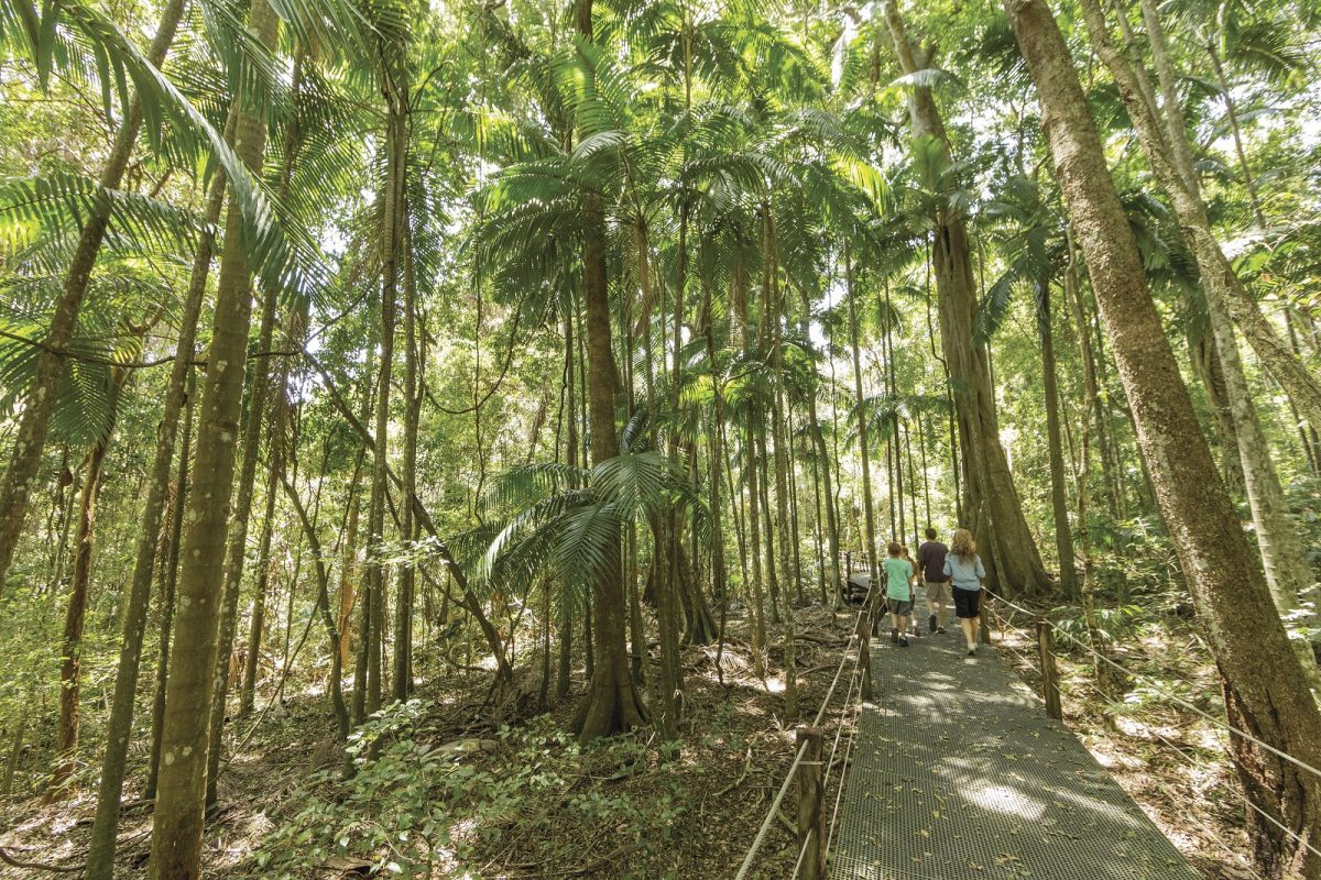 Family walking along boardwalk at Sea Acres Rainforest Centre, Sea Acres National Park. Photo: David Finnegan/OEH