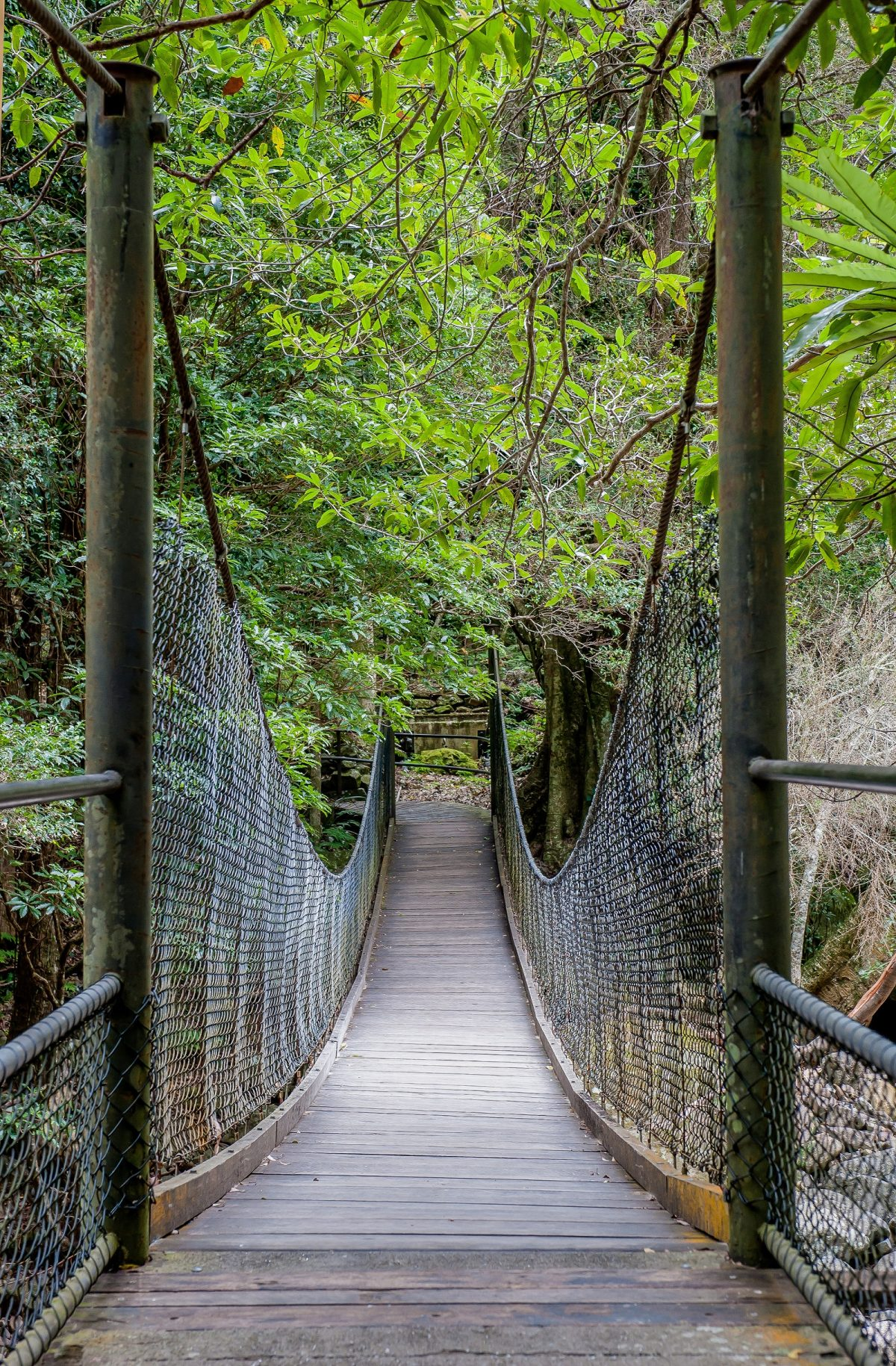 Suspension bridge of the Rainforest loop walk in Budderoo National Park. Photo: Michael Van Ewijk/OEH