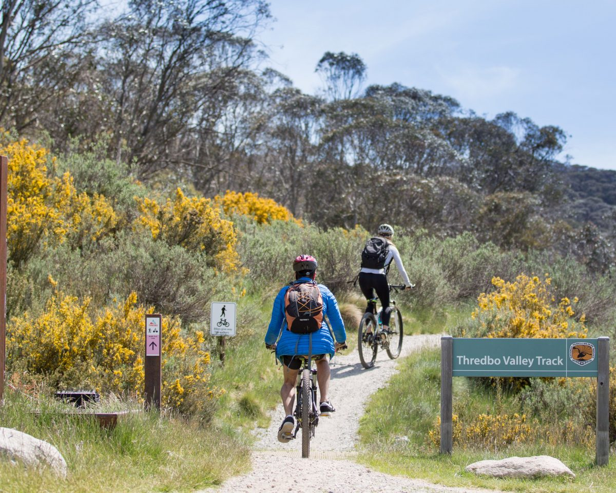 Two people mountain biking on the Thredbo Valley track, Kosciuszko National Park. Photo: Boen Ferguson/OEH