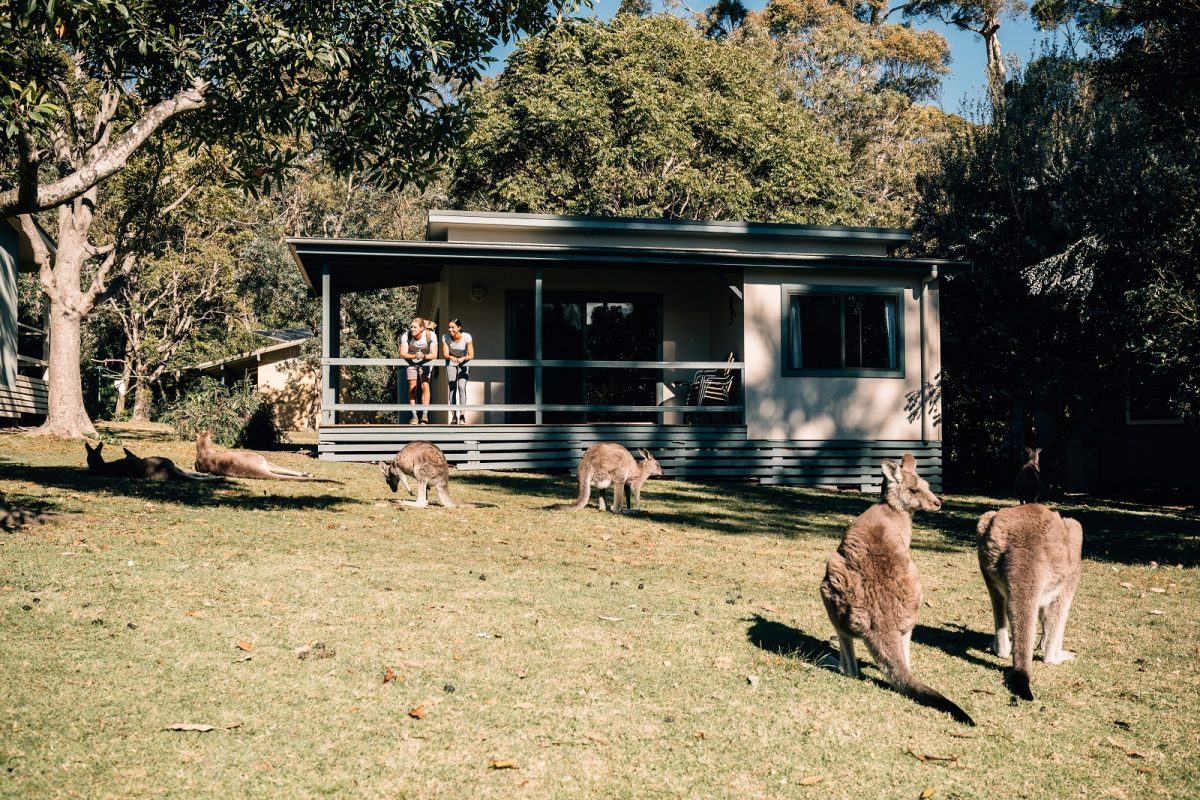 A couple on the porch of a cottage looking out at the kangaroos at Depot Beach cabins and campground. Photo: Melissa Findley/OEH