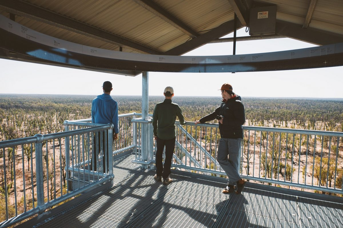 Pilliga lookout tower in Timmallallie National Park. Photo: Harrison Candlin/OEH