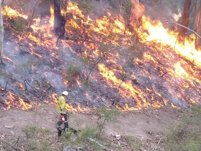 NPWS firefighter conducting planned controlled burning to assist in the protection of life, property and community. Photo: David Croft/OEH