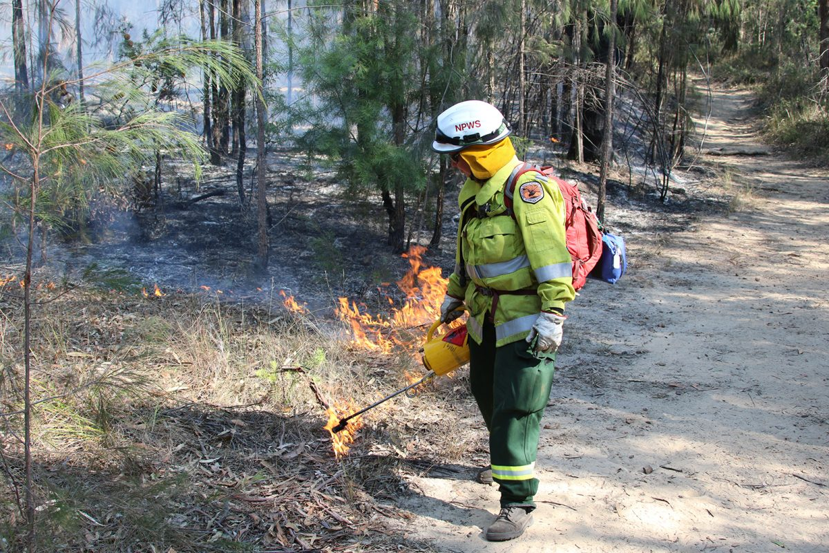 A firefighter undertaking a hazard reduction burn in Blue Mountains National Park. Photo: David Croft/OEH