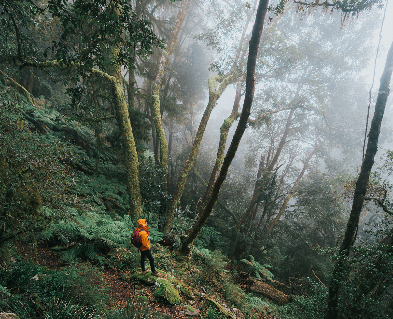 A man hiking in Dorrigo National Park. Photo: Branden Bodman/OEH