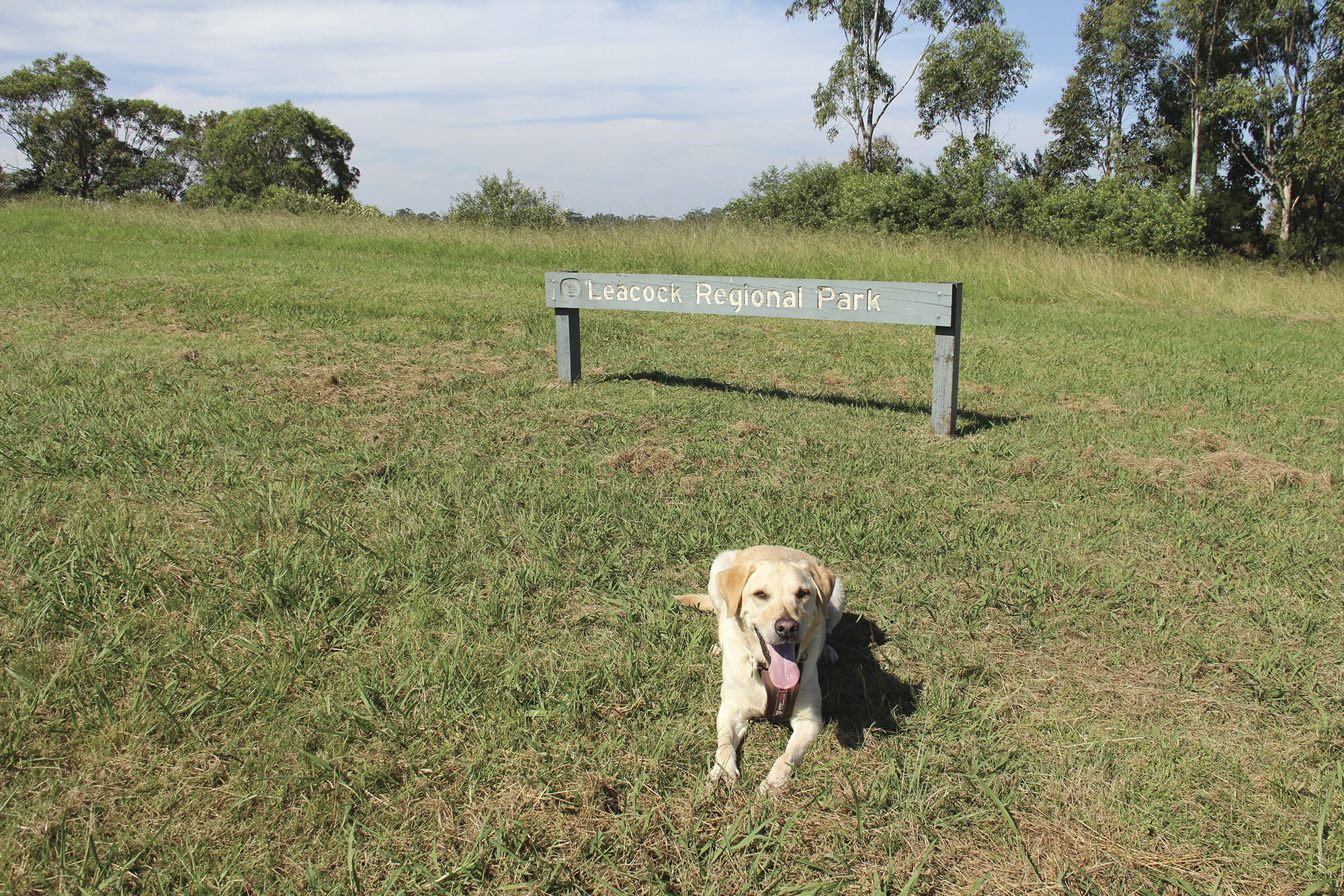 A dog sitting in front of a Leacock Regional Park sign. Photo: John Spencer/DPIE