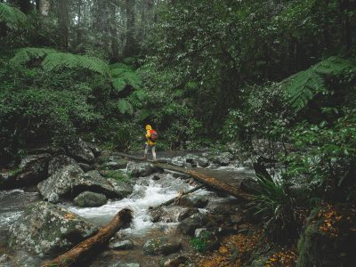 A man crossing Brindle Creek in Border Ranges National Park