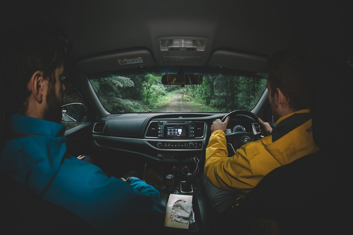 People driving through Border Ranges National Park. Photo: Branden Bodman/DPIE