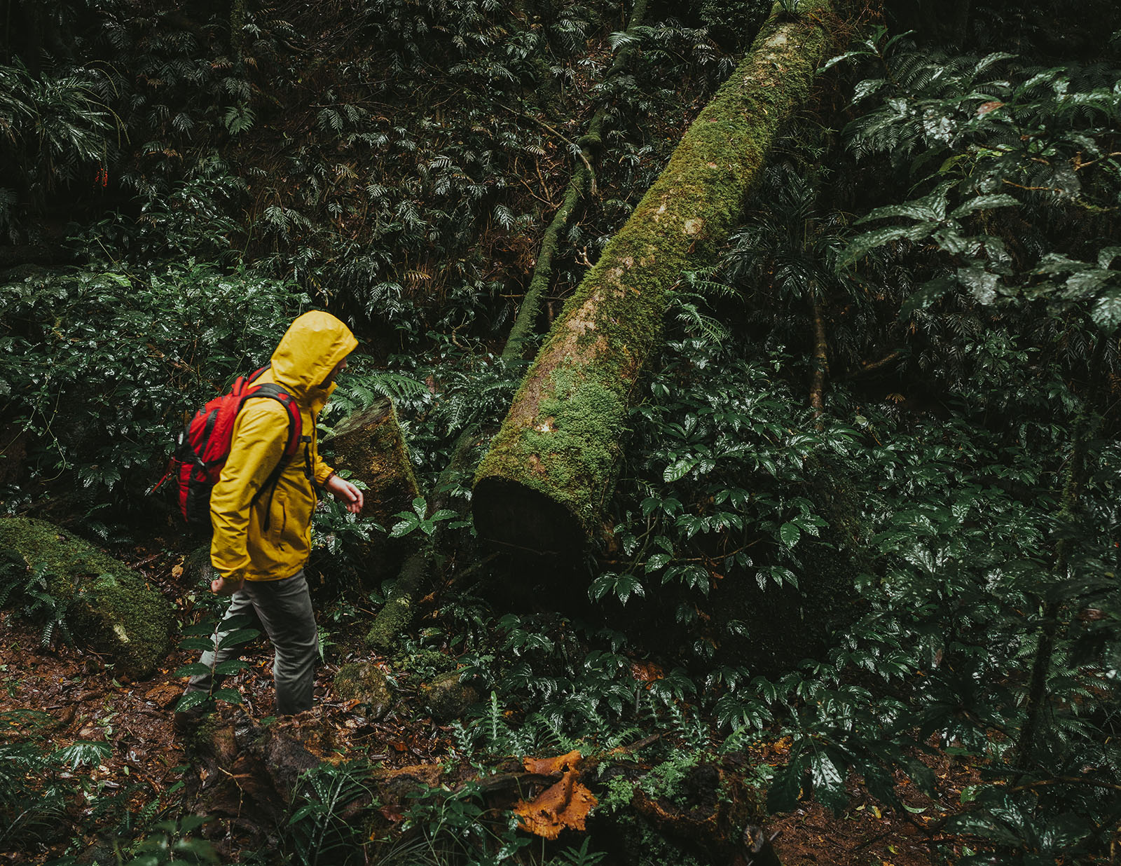 A person walking in Border Ranges National Park