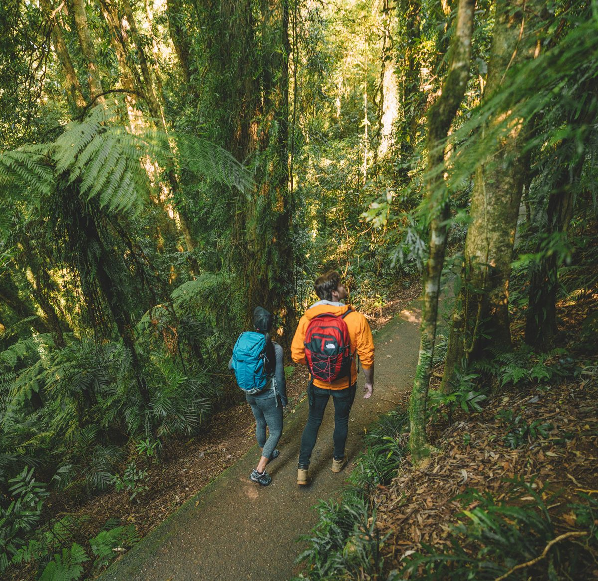 Two people walking on a track in Dorrigo National Park