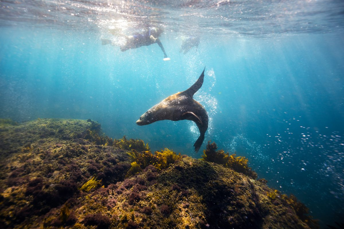 A person swimming with a seal