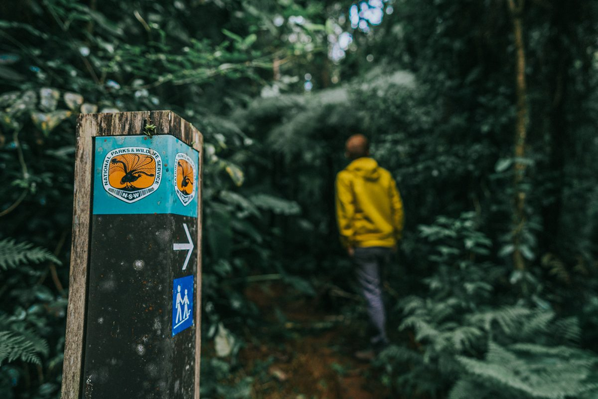 Walking track marker in the foreground and a person in the back ground in Border Ranges National Park