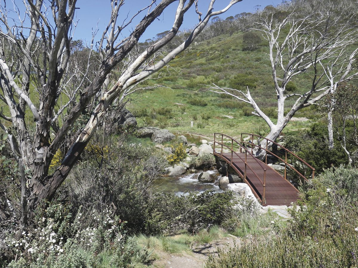 Bridge over cascades, Dead Horse Gap walking track, Thredbo-Perisher area in Kosciuszko National Park. Photo: Elinor Sheargold/DPIE