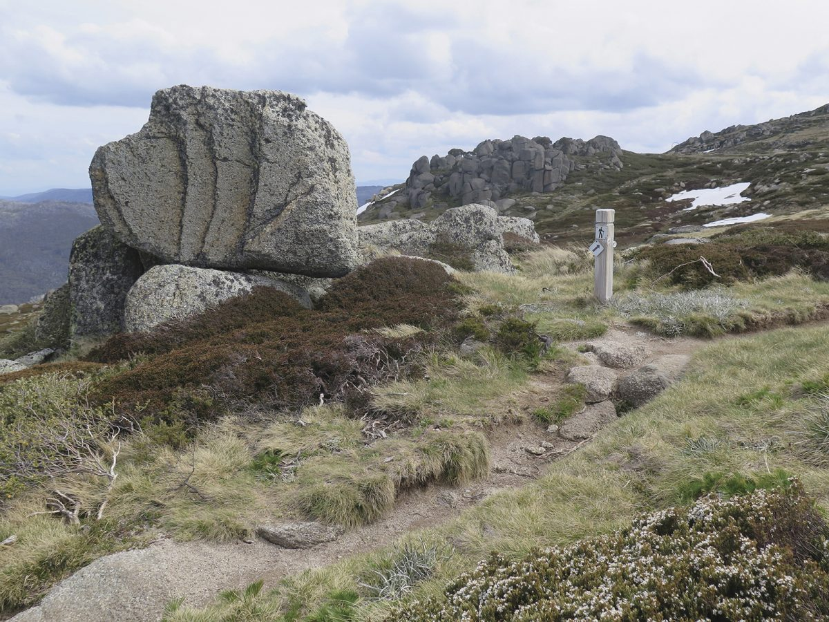 Dead Horse Gap walking track, Ramshead Range, Thredbo-Perisher area in Kosciuszko National Park. Photo: Elinor Sheargold/DPIE