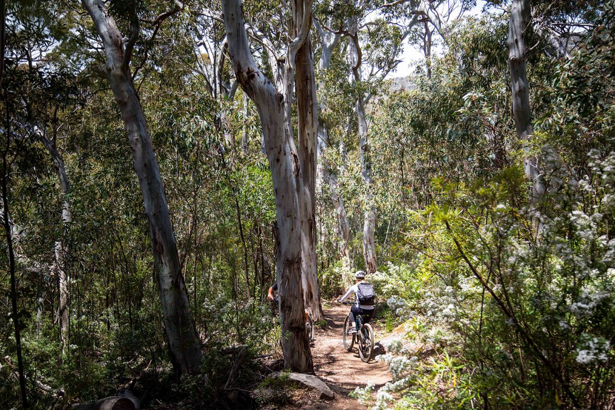 People riding through Thredbo Valley track, Thredbo-Perisher area in Kosciuszko National Park. Photo: Rob Mulally/DPIE