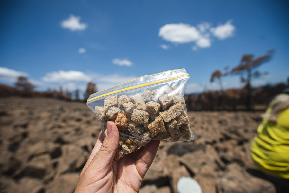 Bogong biscuits in a snap lock bag. Photo: Alex Pike/DPIE