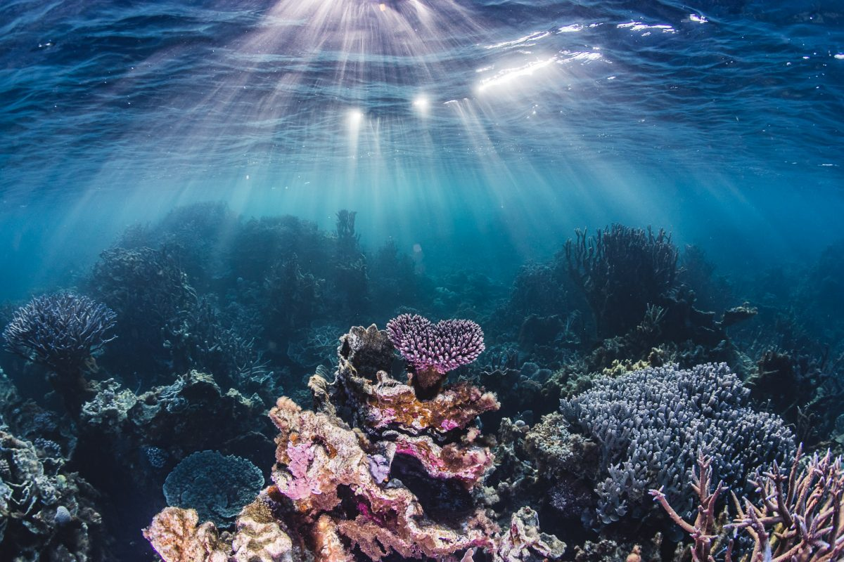 Underwater view of a coral reef. Photo: Alex Pike/DPIE