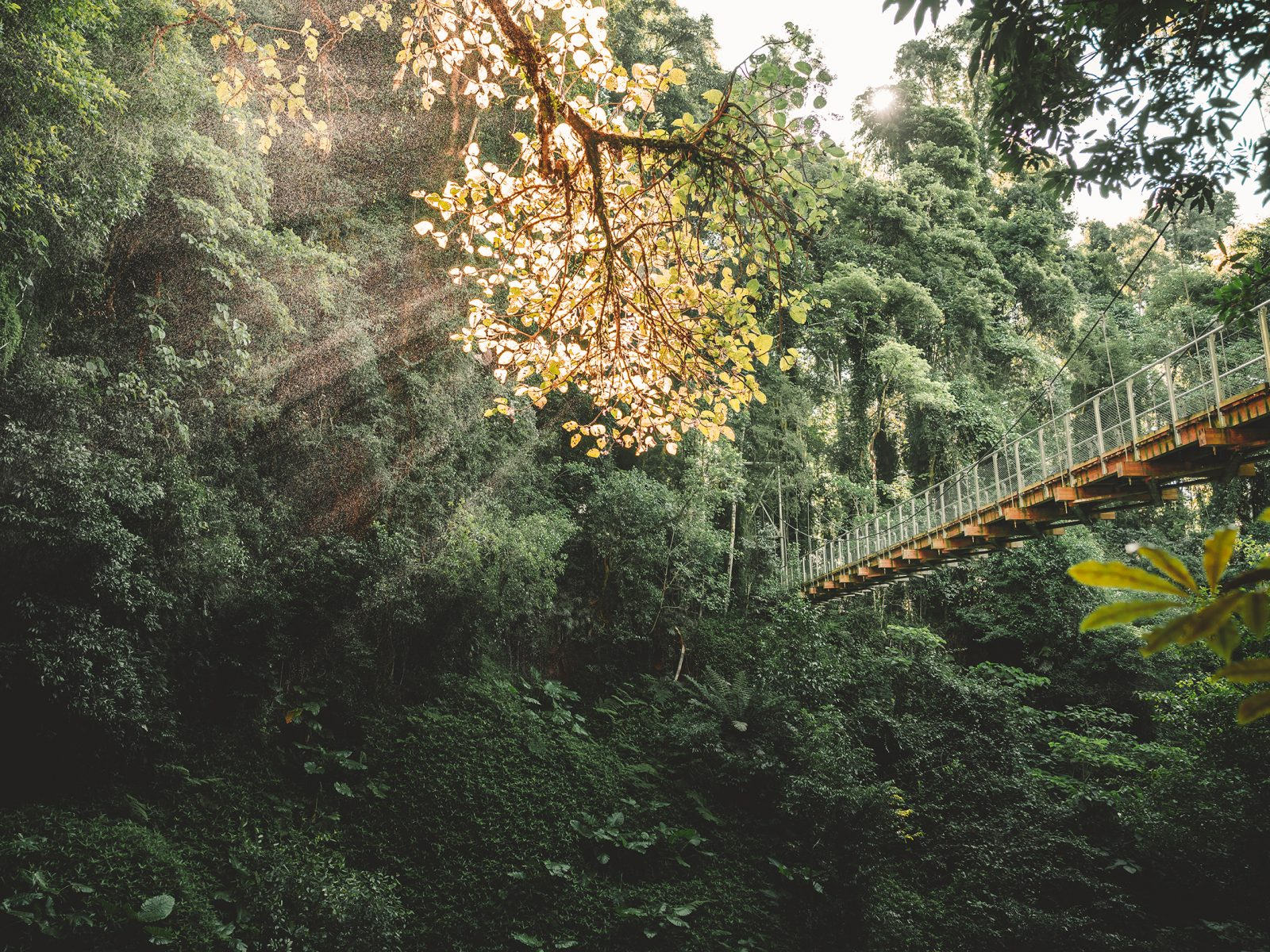 The view up from the Crystal Showers waterfall of the bridge. in Dorrigo National Park. Photo: Branden Bodman/DPIE