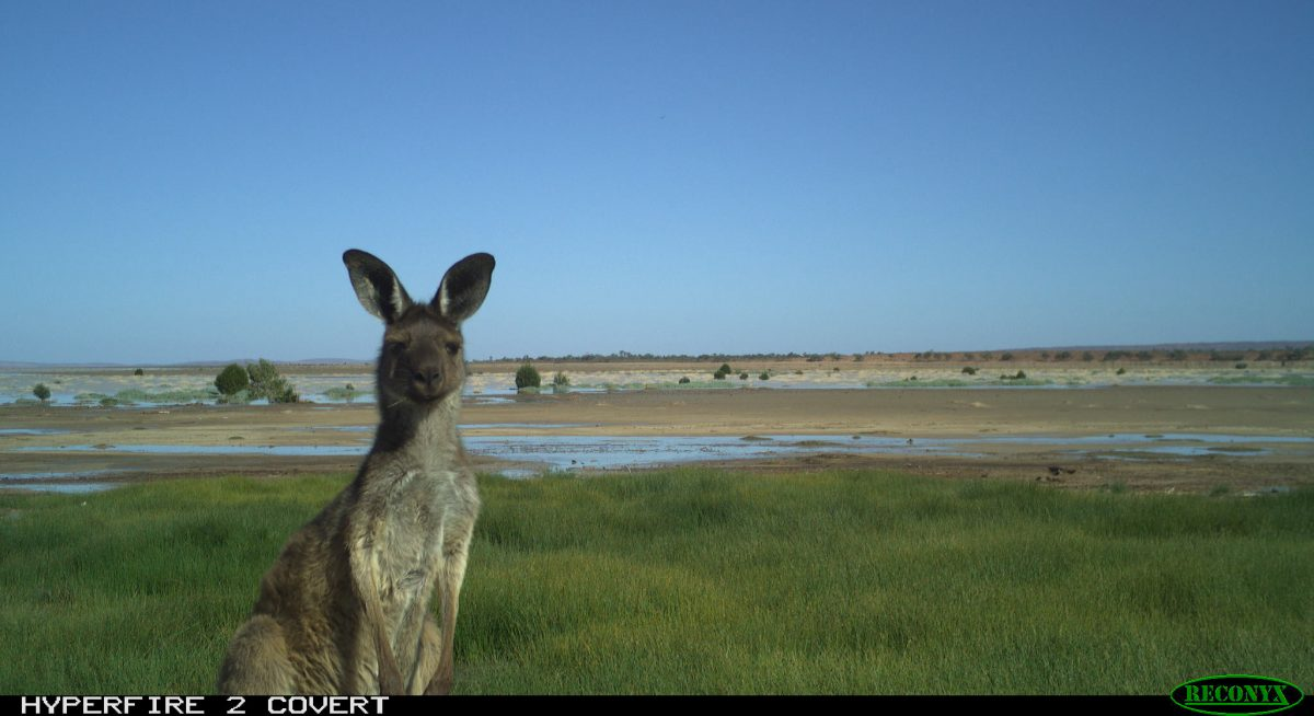 Local wildlife captured on a monitoring camera